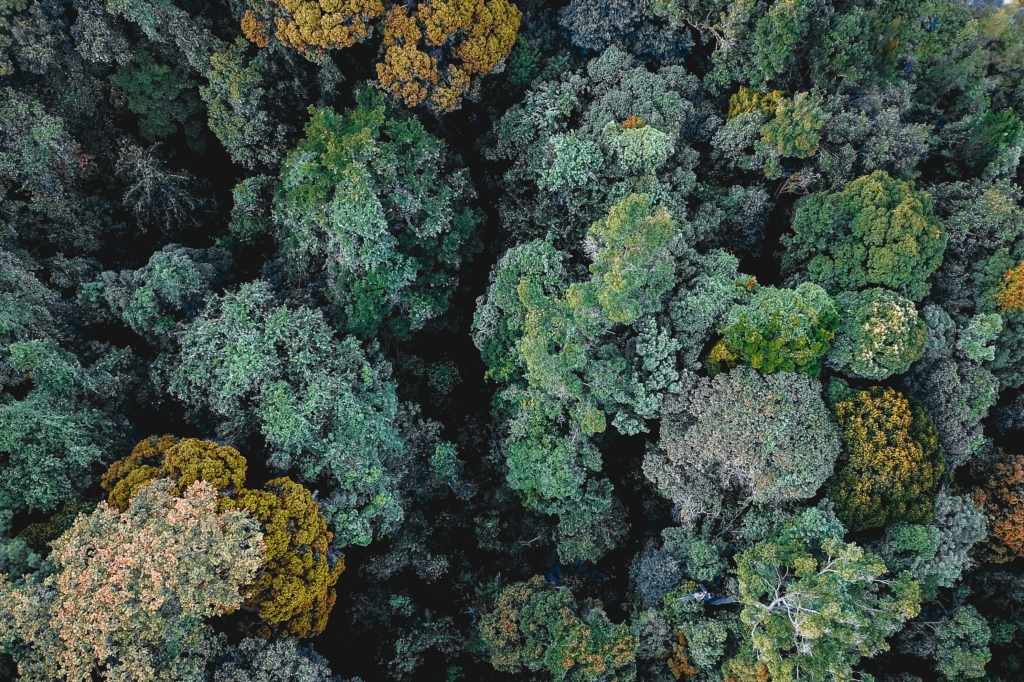 Forest, aerial view, green