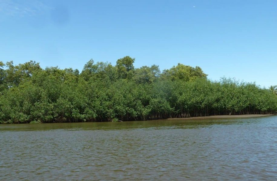 CARBON-EMISSION-REDUCTION-IN-MANGROVE-AREA-COSTA-RICA-6-1024x768