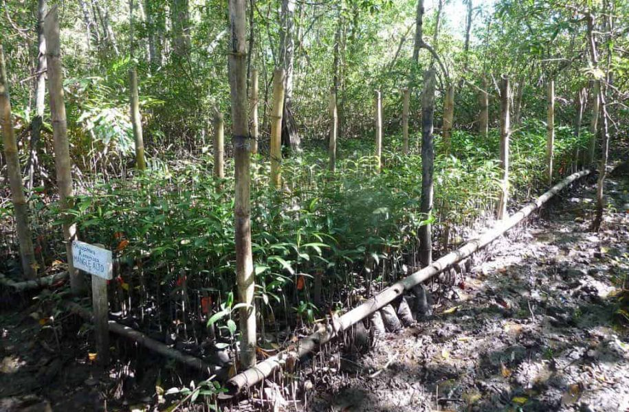 CARBON-EMISSION-REDUCTION-IN-MANGROVE-AREA-COSTA-RICA-7-1024x768
