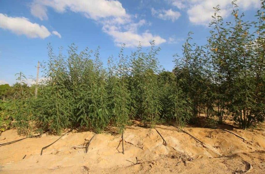 FEASIBILTY-STUDY-FROM-AFFORESTATION-TO-FIBRE-BOARD-PRODUCTION-EGYPT-3-1024x683