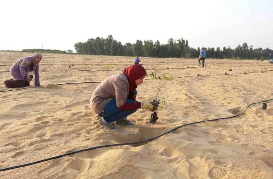 FEASIBILTY-STUDY-FROM-AFFORESTATION-TO-FIBRE-BOARD-PRODUCTION-EGYPT-5-1024x768
