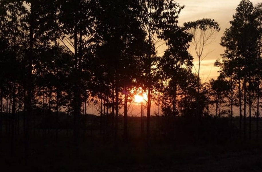 GROUP-CERTIFICATION-OF-REFORESTATION-PROJECT-COLOMBIA-10
