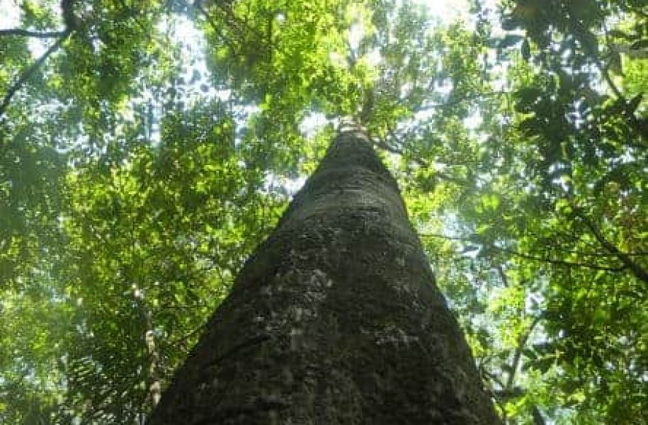 GROUP-CERTIFICATION-OF-REFORESTATION-PROJECT-COLOMBIA-7-e1519920967117