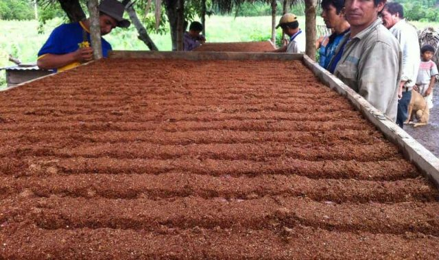 INCLUSION-OF-COCOA-POST-HARVEST-PROCESSES-PERU-6-1024x765