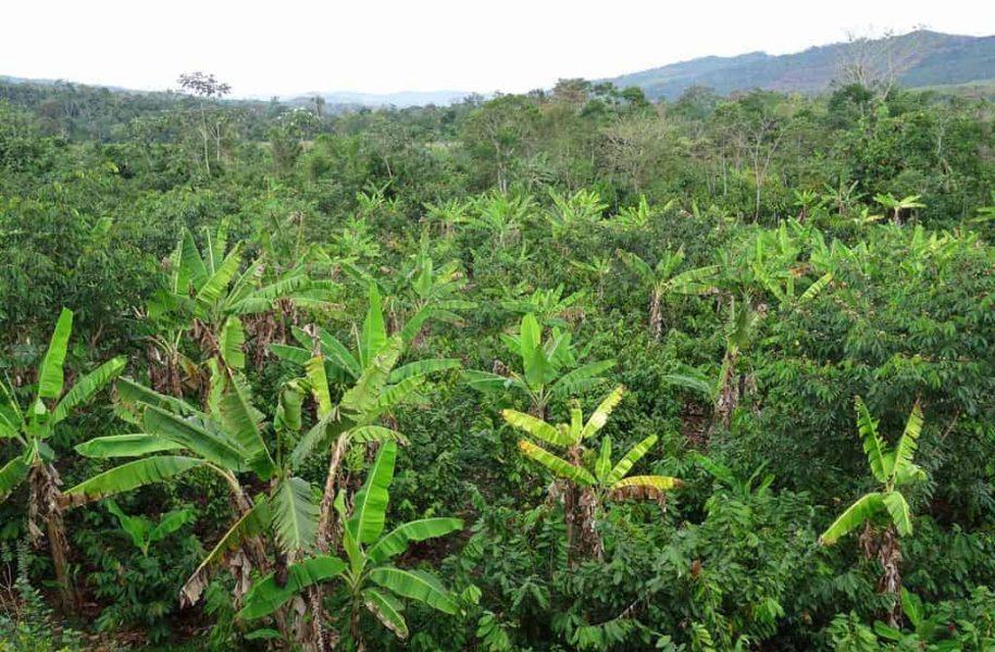 INCLUSION-OF-COCOA-POST-HARVEST-PROCESSES-PERU-9-1024x768