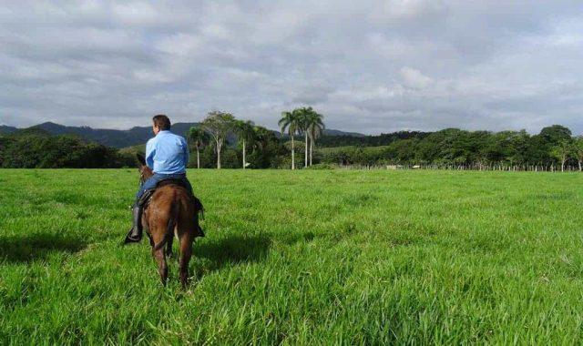 LARGE-SCALE-MECHANIZED-COCOA-PLANTATION-DOMINICAN-REPUBLIC-1-1024x768