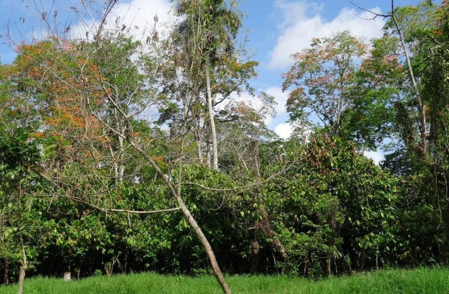 LARGE-SCALE-MECHANIZED-COCOA-PLANTATION-DOMINICAN-REPUBLIC-3-1024x768