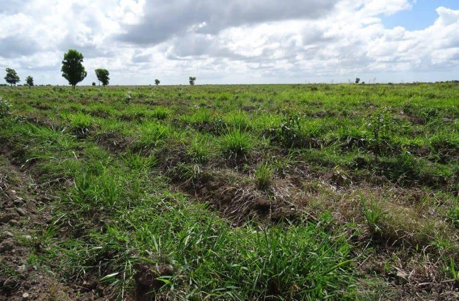 LARGE-SCALE-MECHANIZED-COCOA-PLANTATION-DOMINICAN-REPUBLIC-7-1024x768