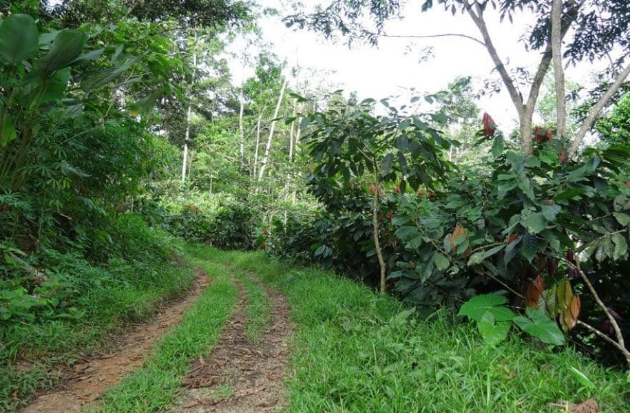 SOIL-AND-CADMIUM-ASSESSMENT-ON-COCOA-PLANTATION-LATIN-AMERICA-3-1024x577
