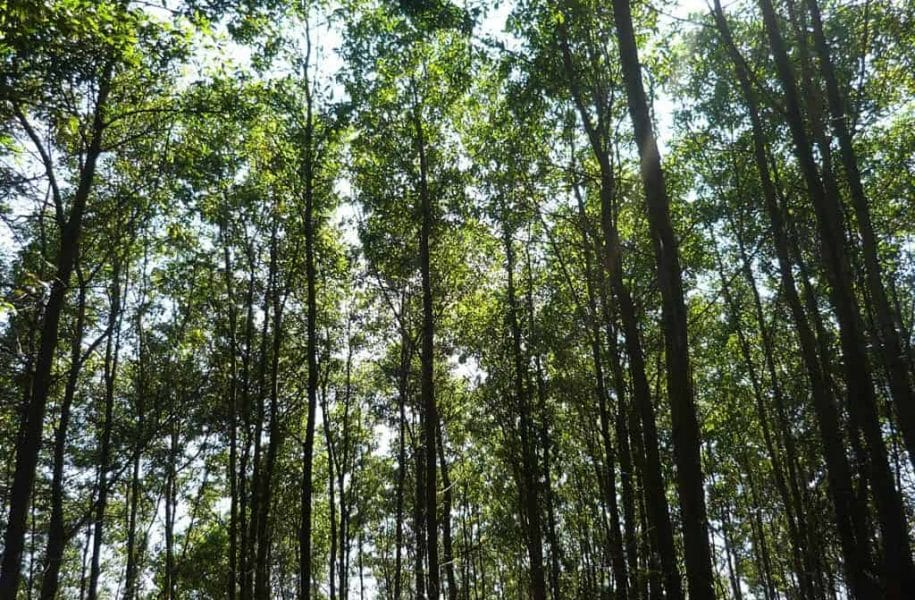 TRAINING-ON-SUSTAINABLE-FORESTRY-VIETNAM-9-1024x768